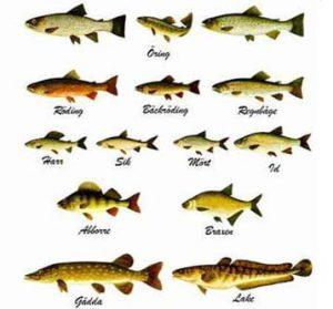 Fiskekarta
